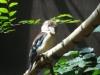 Pán dôležitý vták