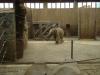 dvojročná slonia samička Rashmi
