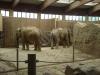 Slonie zadky