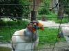 Vták akýsi :)
