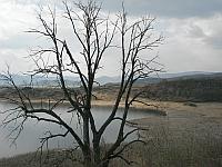 strom rybník