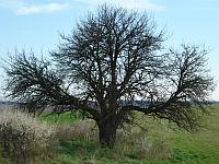 geo strom